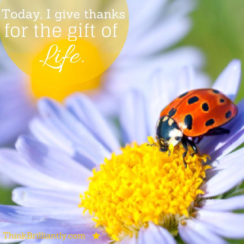 Gratitude 26th October2015